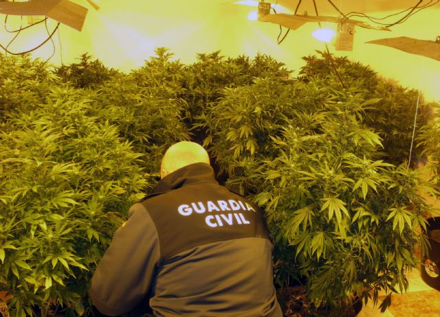 The Civil Guard dismantles a marijuana plantation in a house in Totana illegally occupied by a young couple, Foto 2