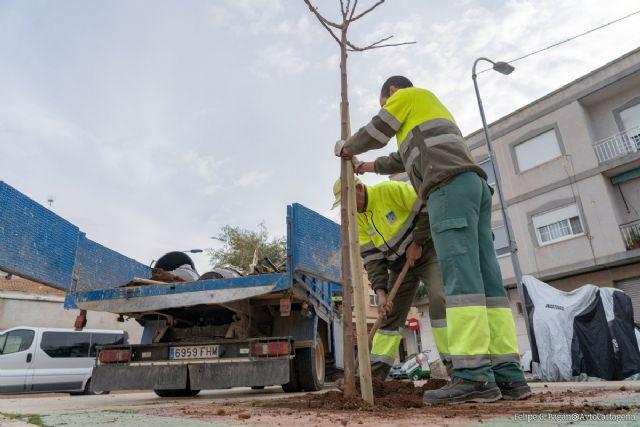 Parques y Jardines planta cerca de 200 árboles en las principales calles del municipio - 1, Foto 1