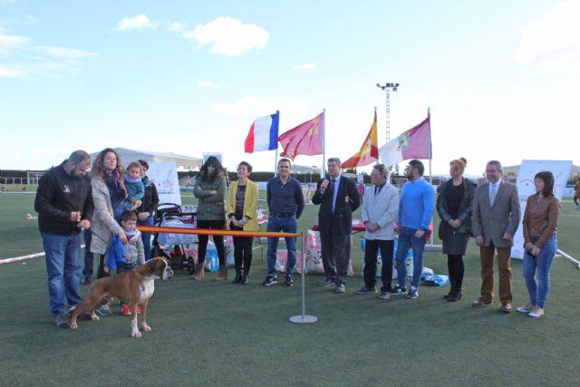 Más de 200 ejemplares participaron en el Concurso Nacional Canino celebrado en Puerto Lumbreras - 1, Foto 1