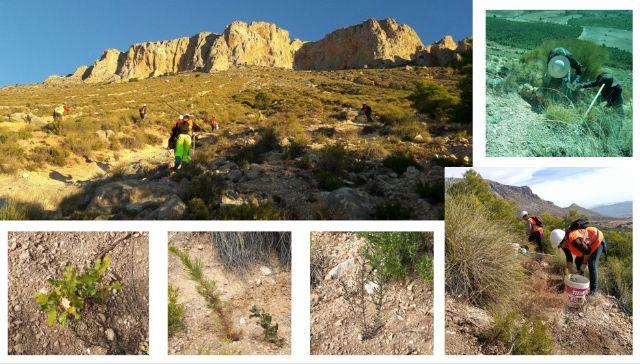 Terminan los trabajos de plantación en La Solana de La Muela - 1, Foto 1