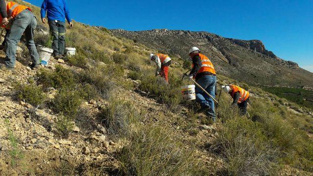 Terminan los trabajos de plantación en La Solana de La Muela - 2, Foto 2