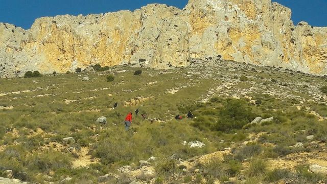 Terminan los trabajos de plantación en La Solana de La Muela - 3, Foto 3