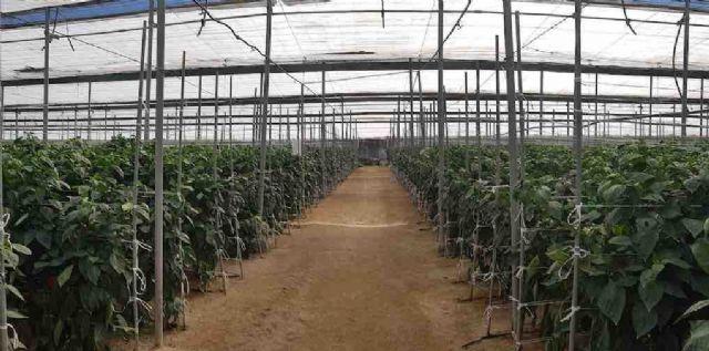 Presente y Futuro del Sector Hortofrutícola de Almería - 1, Foto 1