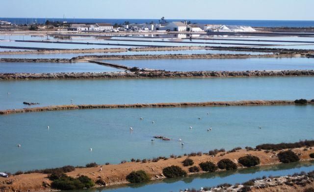 El programa europeo Life financia el proyecto de conservación de hábitats y aves en Las Salinas y arenales de San Pedro - 2, Foto 2