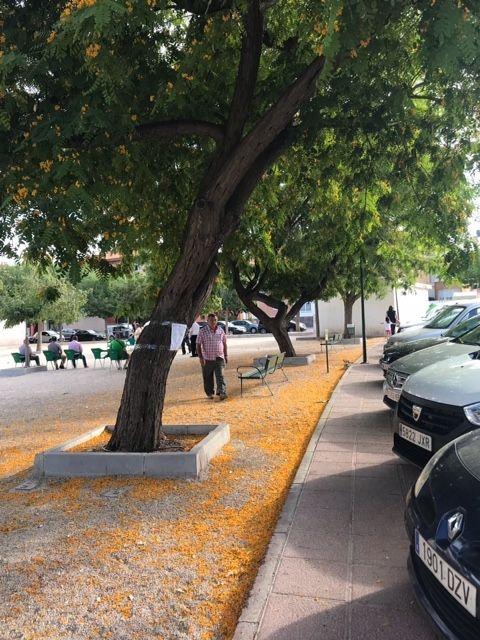 Repondrán varias alineaciones de árboles viarios por su afección interna que había generado debilidades estructurales en tronco y ramas, Foto 4