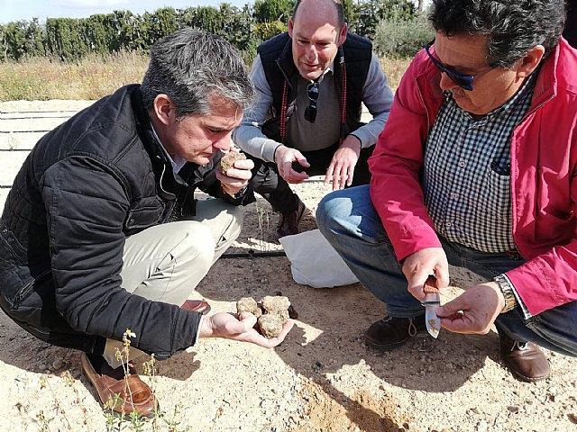 Agricultura amplía el estudio de la viabilidad del cultivo de la trufa del desierto al Valle del Guadalentín, Foto 1