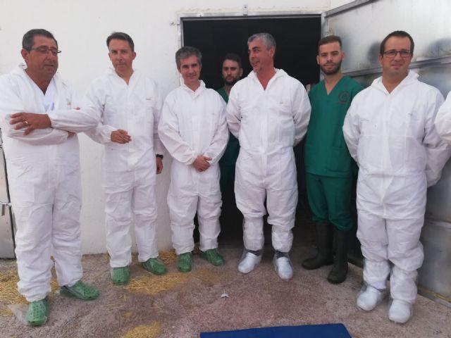 El primer centro regional de inseminación artificial de porcino en Lorca amplía su capacidad para 40 nuevas cabezas de porcino - 1, Foto 1