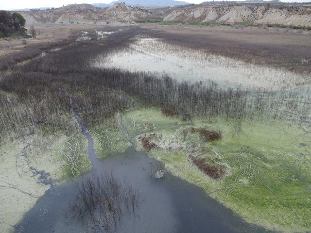 Mortandad masiva de peces en el embalse de los Rodeos - 2, Foto 2