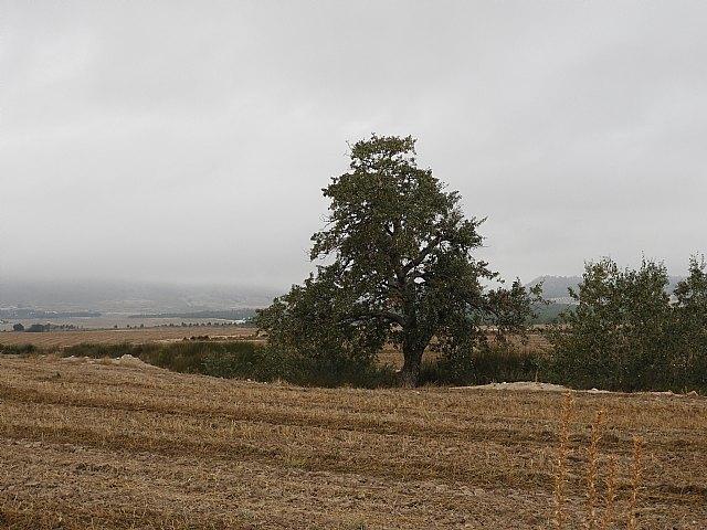 Atentado ecológico en el río Turrilla de Lorca - 3, Foto 3