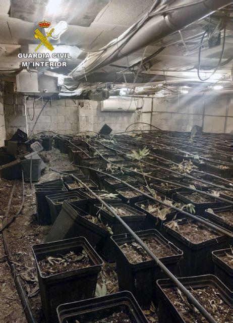 La Guardia Civil desmantela un invernadero subterráneo de con cerca de un millar de plantas de marihuana - 5, Foto 5