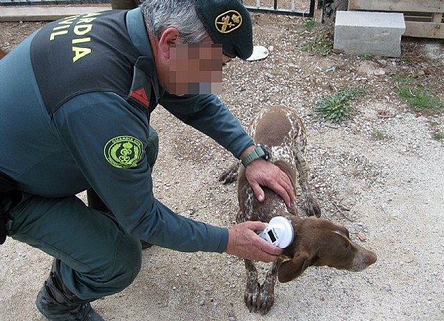 The Civil Guard retrieves a hunting dog stolen in Totana - 1
