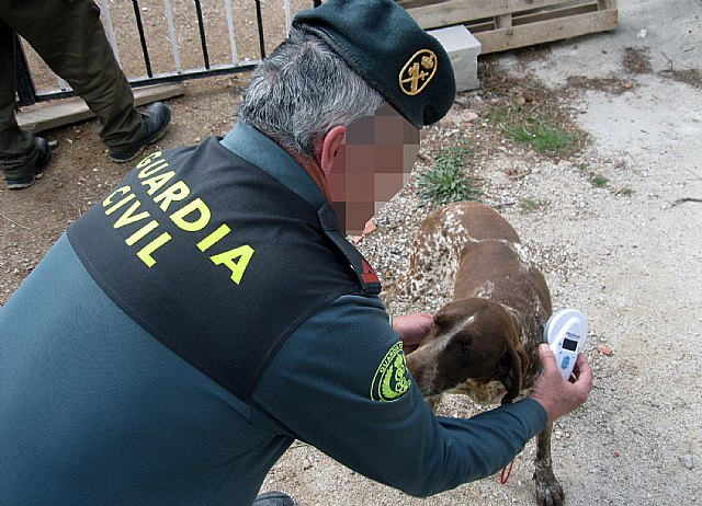 The Civil Guard retrieves a hunting dog stolen in Totana - 2