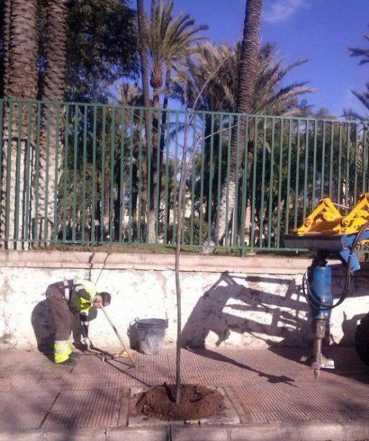 Parques y Jardines realiza el destoconado de viejos troncos para recuperar diversos árboles en el municipio - 3, Foto 3
