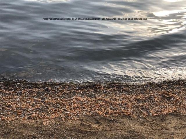 Y el Mar Menor se murió... - 1, Foto 1