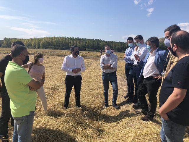 La cosecha de la DO Arroz Calasparra crecerá un 20 por ciento esta campaña, en la que esperan superar los 3 millones de kilos - 1, Foto 1