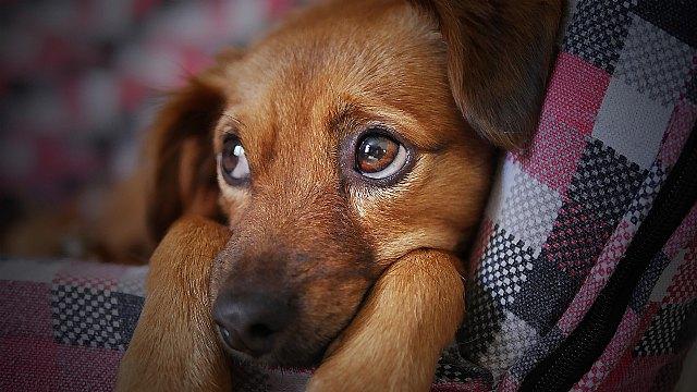 Posicionamiento de la Cátedra Animales y Sociedad respecto al borrador de la Ley de Protección y Derechos de los animales - 1, Foto 1