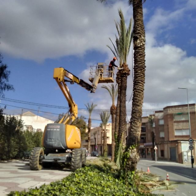 They carry out pruning and maintenance of the population of palm trees on public roads, parks and gardens