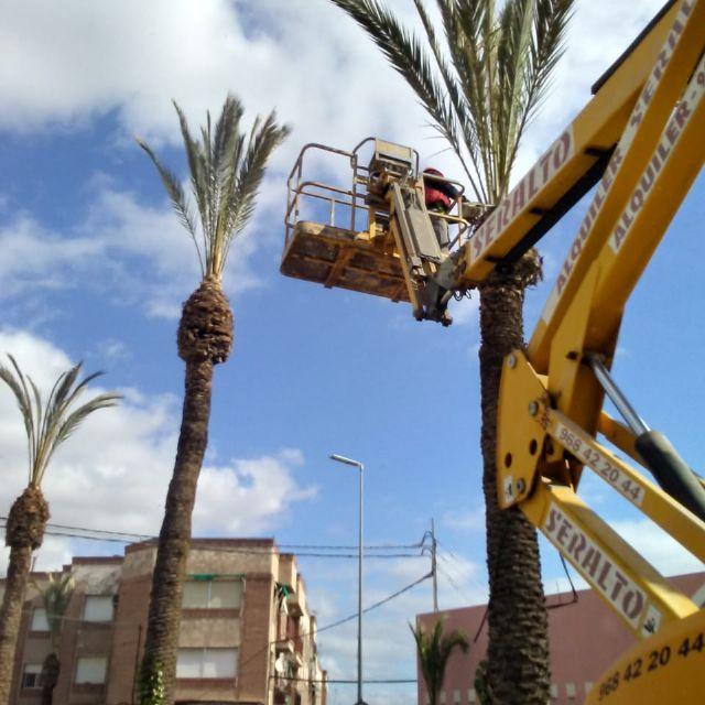 Realizan labores de poda y mantenimiento de la población de palmeras en la vía pública, parques y jardines - 2, Foto 2