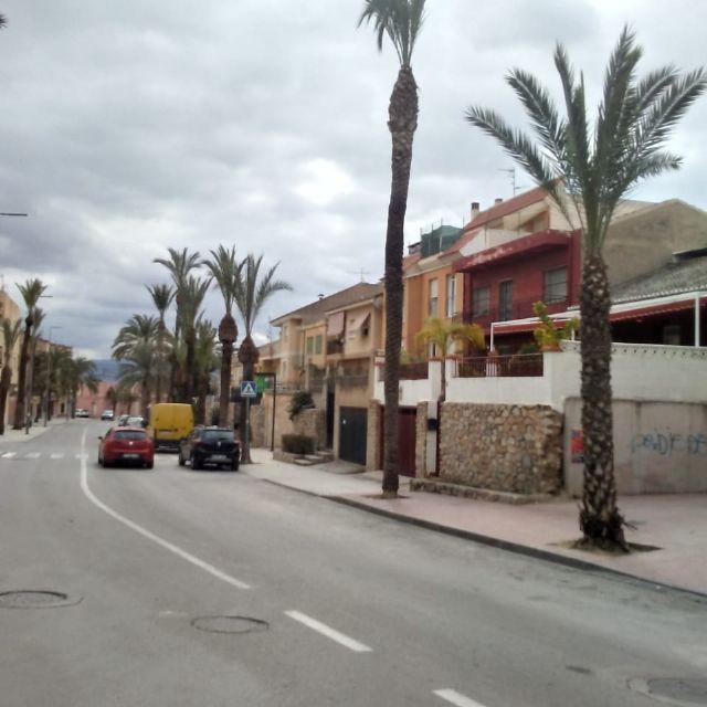 Realizan labores de poda y mantenimiento de la población de palmeras en la vía pública, parques y jardines - 3, Foto 3