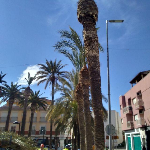 Realizan labores de poda y mantenimiento de la población de palmeras en la vía pública, parques y jardines - 4, Foto 4