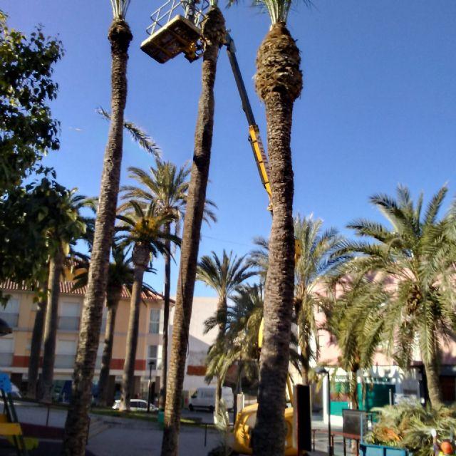 Realizan labores de poda y mantenimiento de la población de palmeras en la vía pública, parques y jardines - 5, Foto 5
