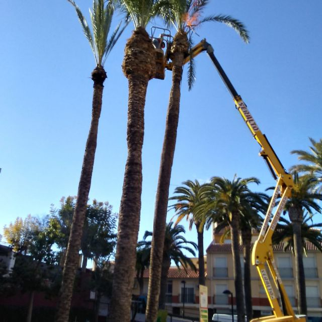 They carry out pruning and maintenance of the population of palm trees on public roads, parks and gardens, Foto 6