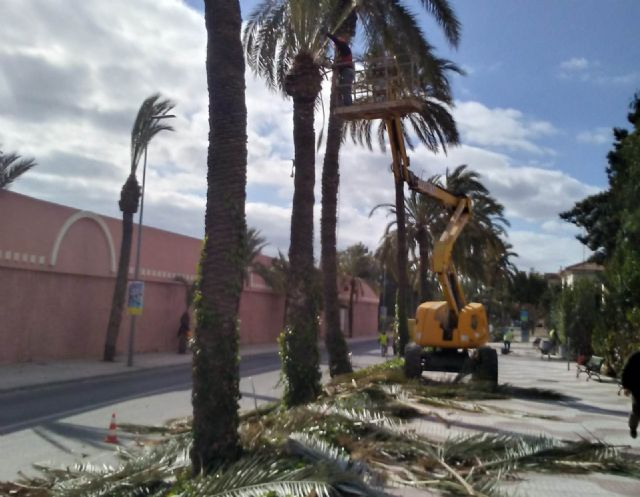 They carry out pruning and maintenance of the population of palm trees on public roads, parks and gardens, Foto 7
