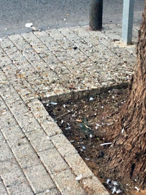 La asociación de vecinos de Vistabella reclama una solución al problema de las palomas - 1, Foto 1