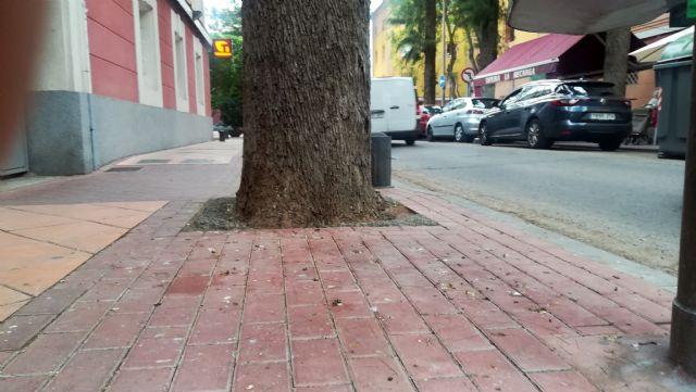 La asociación de vecinos de Vistabella reclama una solución al problema de las palomas - 2, Foto 2