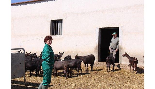 UPA propone ayudar a los ganaderos de caprino a reducir su producción láctea nacional un 10% - 1, Foto 1
