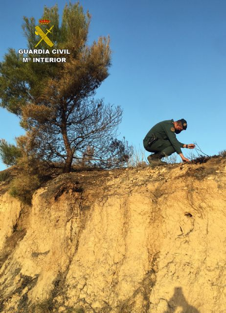 La Guardia Civil investiga a una persona  por originar un incendio forestal en Barinas-Abanilla - 3, Foto 3