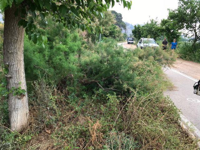 La CHS realiza el desbroce y la poda en la mota del río entre Orihuela y Beniel - 1, Foto 1