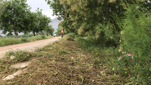 La CHS realiza el desbroce y la poda en la mota del río entre Orihuela y Beniel - 3, Foto 3
