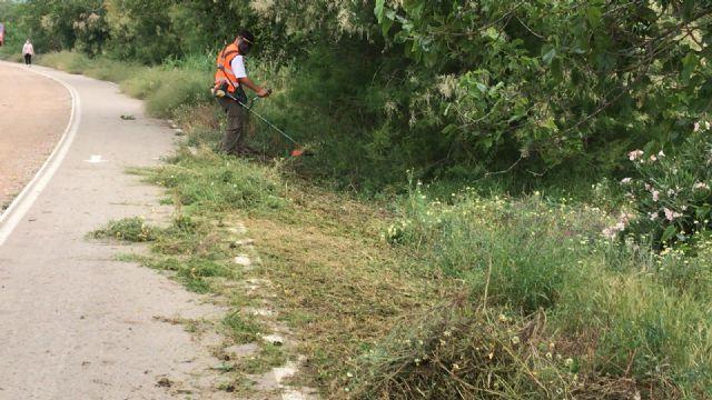 La CHS realiza el desbroce y la poda en la mota del río entre Orihuela y Beniel - 4, Foto 4