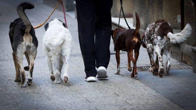 Los dueños de animales de compañía tendrán que llevar un recipiente con agua y vinagre diluido para limpiar la orina - 1, Foto 1