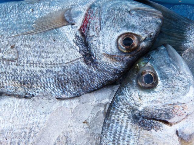 Investigadores de la UMU utilizan un novedoso procedimiento para detectar la grasa en el pescado - 1, Foto 1