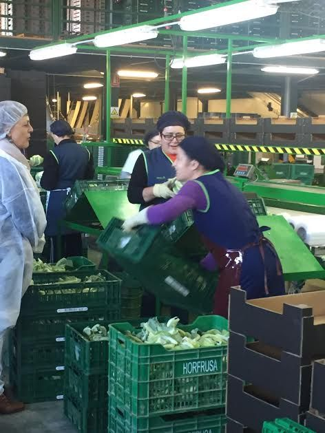 """Municipal authorities visit the fruit and vegetable marketing company """"Horfrusa, SL"""", Foto 4"""