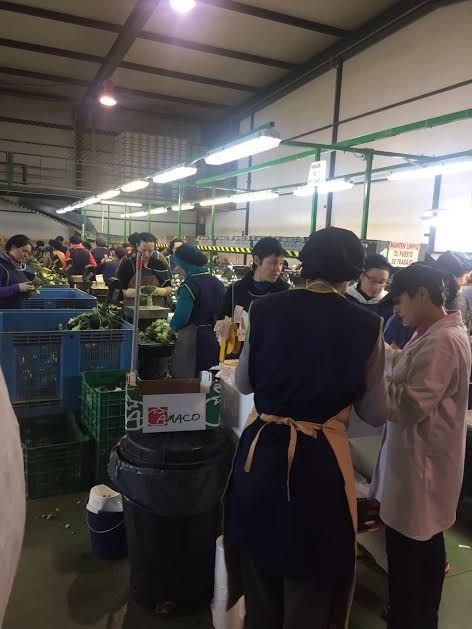 "Municipal authorities visit the fruit and vegetable marketing company ""Horfrusa, SL"", Foto 5"