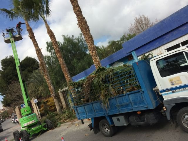Perform pruning and maintenance of the population of palm trees on public roads, parks and gardens - 3