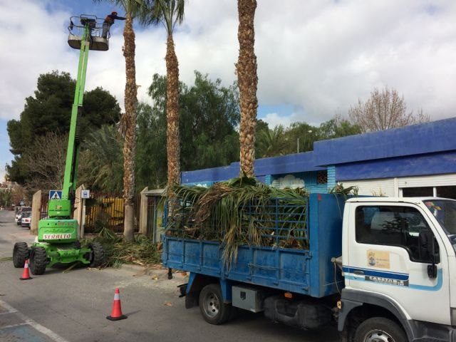 Perform pruning and maintenance of the population of palm trees on public roads, parks and gardens - 4