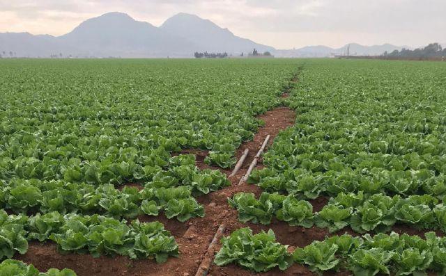 La aportación económica real de la agricultura intensiva del Campo de Cartagena supone un 0,6% del PIB - 1, Foto 1