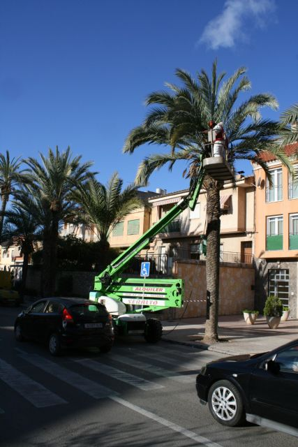 They carry out pruning and maintenance of the population of palm trees on public roads, and parks and gardens of the population