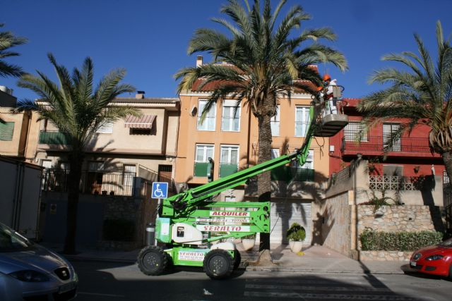They carry out pruning and maintenance of the population of palm trees on public roads, and parks and gardens of the population - 2