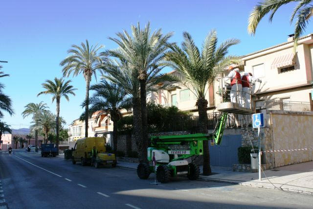 They carry out pruning and maintenance of the population of palm trees on public roads, and parks and gardens of the population - 4
