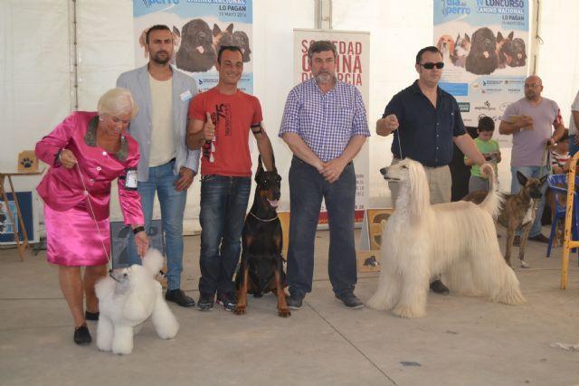 San Pedro se une a la celebración del Día del Perro - 3, Foto 3