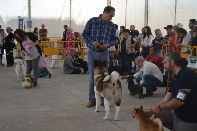 San Pedro se une a la celebración del Día del Perro - 4, Foto 4