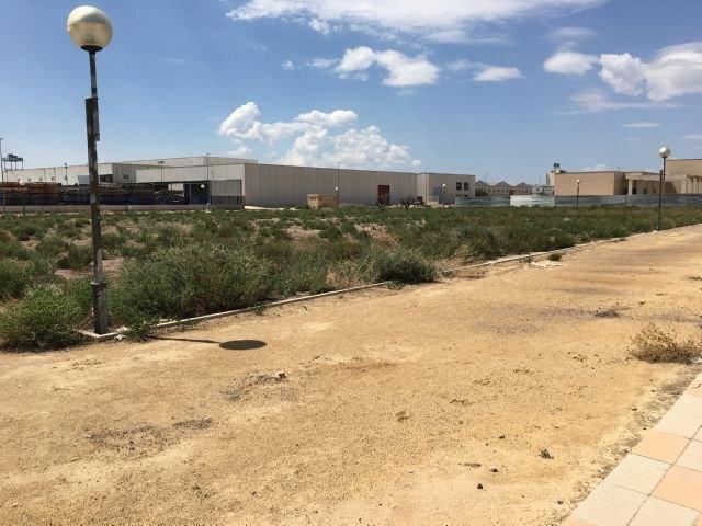 El Grupo Municipal Popular solicitará la limpieza y acondicionamiento de las zonas verdes del Polígono Industrial, así como la reposición o reparación de las farolas y señales de tráfico, Foto 3