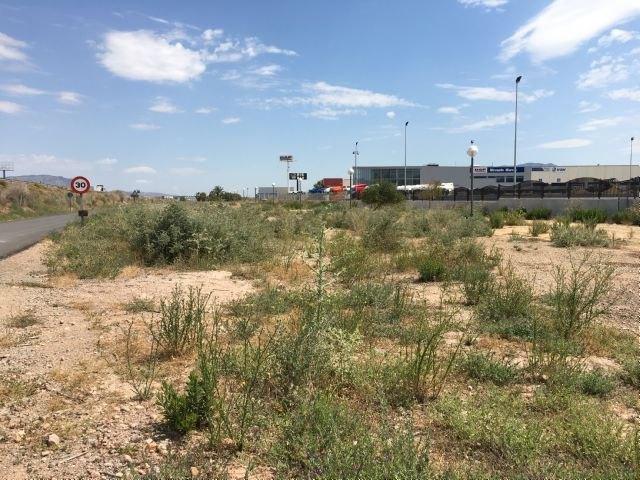 El Grupo Municipal Popular solicitará la limpieza y acondicionamiento de las zonas verdes del Polígono Industrial, así como la reposición o reparación de las farolas y señales de tráfico, Foto 4