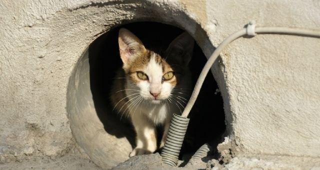 Se renueva el programa CES para el mantenimiento de colonias de gatos ferales - 1, Foto 1