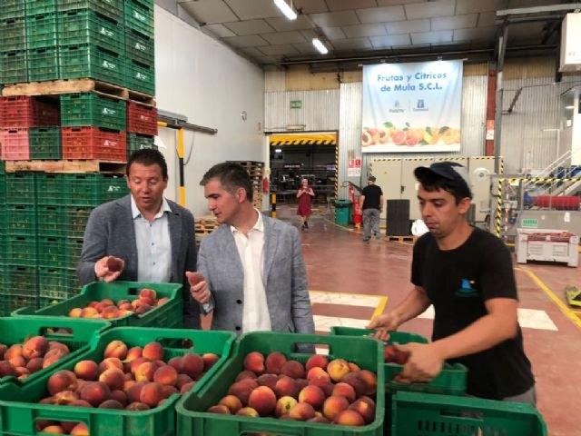 Las cooperativas de cítricos y frutas de la Región aumentan su producción de media un 10 por ciento en lo que llevamos de año - 1, Foto 1